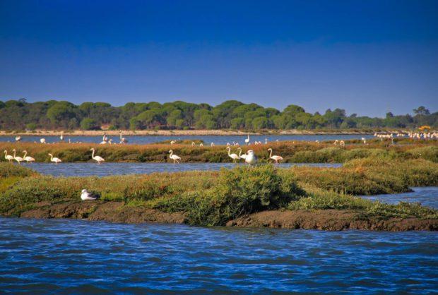 Reserva Natural do Estuário do Sado