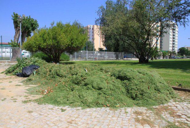 Recolha Resíduos Verdes