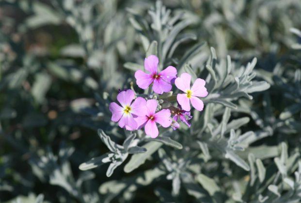 Flora e Vegetação