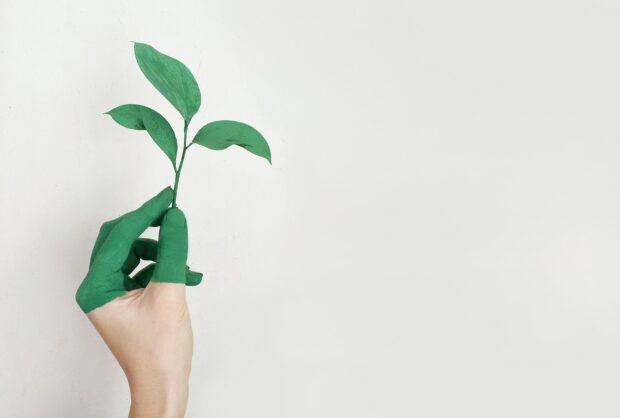 Concurso Pegada Ecológica