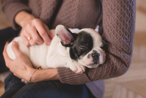 Assistência Responsável a Cães e Gatos