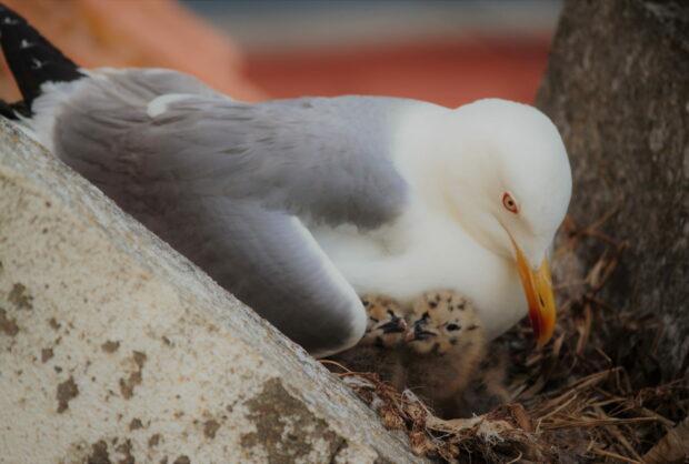 Conte as gaivotas da cidade de Setúbal